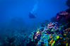 Rainbow (RoamingTogether) Tags: diving florida floridakeys ikelite ikeliteds51 johnpennekamp keylargo molassesreef nikon nikon181053556 nikond300 pennekampstatepark reef scuba scubadiving watersports