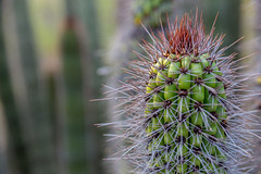 Arizona Desert Botanical Garden (davebentleyphotography) Tags: botanicalgarden davebentleyphotography desertbotanicalgarden 2017 arizona canon catus desert travel arizonadesertbotanicalgarden phoenixarizona phoenix cacti nature landscape