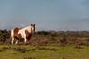 Wild Horse (SamsPhoto's) Tags: photo photography sam rizzo diary nikon nikkor 35mm 50mm lens camera flickr candid d90 pic pics photograph colour samrizzo samrizzophoto uk photos photographs bournemouth poole dorset news