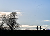 walking the dog (Paul Wrights Reserved) Tags: silhouette bluesky walking people dog tree sky horizon simple landscape skyscape clouds togetherness birds bird birdsinflight scene emptyspace