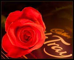 And all because.......II (EddieAC) Tags: macromondays litbycandlelight rose chocolates milktray warm