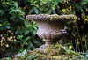_DSC6209 (xav_roberts) Tags: nikon nikonv1 nikkor dof moss lichen nature funghi rust autumn wintersun moisture dew morningdew outdoor countryside rural plants nikkon1 nikkor32mm nikonft1 sigma105mmf28 sigma105mm sigma