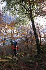 Salendo da Castagno d'Andrea verso il Monte Falterona (LLauraNLS) Tags: appennino forestecasentinesi italia italy toscana tuscany landscape paesaggi mountains montagne foresta forest wood foliage nature trekking hiking trekkingdelleforestesacre dogtrekking dogs dog cani sentierodelleforestesacre
