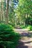 Woodland Walk (Keith Coldron) Tags: trees woodland path bushes walking