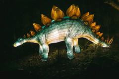 Wild Lights (Strangelove 1981) Tags: 2017 dublinzoo ireland wildlights zoo night lights glow light animals festival dinosaurs dinosaur stegosaurus