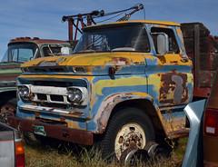 a coat of many colors (Patinagal) Tags: paint relic rust truck vintage color peelingpaint decay abandoned chevrolet