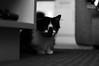 DSC_4929 (TwistedMotox13) Tags: ant cat sunstorm