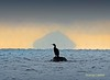 Cormorant Ailsa Craig (g crawford) Tags: crawford ayrshirenorthayrshire westkilbride seamill ailsacraig mirage bird cormorant shag