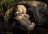 Sleeping cherub (Jon Bowles) Tags: cherub statue color closeup sun
