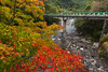 _MG_3536 (鹽味九K) Tags: 楓葉 武陵農場 秋天 bridge autumn