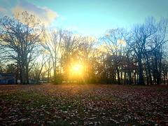 sun ☀️ (#KPbIM) Tags: 2017 fall november jaycee starr sun evening sunset trees park michigan royaloak leaves
