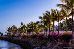 Puerto de Mogán (janmalteb) Tags: gran canaria kanaren canarias canary islands puerto de mogan palm trees palmen wasser water meer sea ocean atlantic atlantik steine stones himmel sky blau blue canon eos 1000d