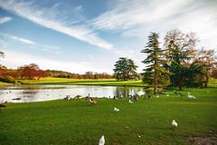 Leeds Castle - Park (Julie Greg) Tags: park grass lake water tree canon sky leedscastle nature animal colours