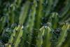 (Alvaro Álvarez) Tags: mexico espinas cactus desierto vegetacion verde green vegetation bokeh