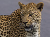 Beauty in love (jaffles) Tags: southafrica südafrika kruger np krügernationalpark natur nature wildlife safari olympus