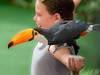 A toucan and a little girl (Robert-Ang) Tags: toucan girl singapore jurongbirdpark