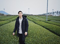 Green Tea of Jeju (DChoi95) Tags: humans portrait jeju korea leaf leaves field greentea tea green