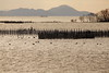Lake Biwa (Teruhide Tomori) Tags: water lakeside winter landscape shiga japan japon nature 琵琶湖 湖北 長浜 滋賀県 日本 風景 田舎 countryside lake lakebiwa