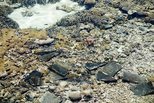 95-Labuan Bajo e Islas de Komodo (10)