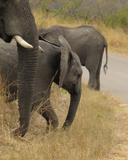 Elephants - from a another perspective