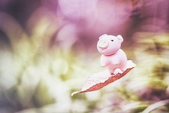 4/365 : Leaf Surfing (♥GreenTea♥) Tags: pig eraser pigeraser pinkpig pink iwako iwakoeraser iwakoerasers イワコー ef100mmf28macrousm canonef100mmf28macro t1i canont1i canont1irebel eos canoneosrebelt1i googlenikcollection nikcollection colorefexpro viveza hdrefexpro 365 photoaday pictureaday project365 365toyproject oneobject oneobject365daysproject 365the2018edition 3652018 day4365 04jan18 365day4 day4 project3654 project36501042018 01042018 odc ourdailychallenge odcanimallaugh ourdailychallengeanimallaugh animallaugh macro leaf float floating fly flying surf bokeh