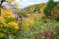 Rudolstadt von oben (Heidecksburg) 01 (zimmermann8821) Tags: berge gebäude herbst naturlandschaft