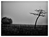 Herbst (S SCH) Tags: s sch siegfried schmid schweinfurt schwarzundweis herbst natur landschaft landscape baum tree nebel fog
