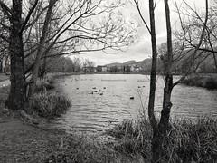 L'ovalie, Sassenage, France (B Plessi) Tags: sassenage ovalie lac lago etang france dauphiné vercors chartreuse jardin public alberto tree