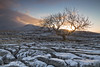 A winter sunrise on the ancient limestone pavements of Twistleton Scar with Ingleborough in the distance - Ribbledale, Yorkshire Dales National Park. (Wend's photography) Tags: twistleton scar yorkshire yorkshiredales dales photography sunrise sunlight sunburst limestone pavements snow snowscape frost winter winterscape ancient atmosphere atmospheric national park nationalpark tree lone lonely wendsphotography wwwwendsphotographycouk cloudscape clouds landscape ribblesdale