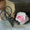 Still life (Kerstin Frank art) Tags: scissors roses flower books texture kerstinfrankart kerstinfranktexture key stilllife still oldbook book