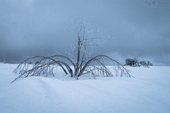 Tree in snow (Cloudtail the Snow Leopard) Tags: baum hornisgrinde schnee snow winter mountain schwarzwald black forest