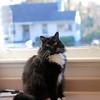 """I am here."" (rootcrop54) Tags: batman tuxedo male longhaired fluffy fluffilicious window goofy neko macska kedi 猫 kočka kissa γάτα köttur kucing gatto 고양이 kaķis katė katt katze katzen kot кошка mačka gatos maček kitteh chat ネコ"