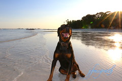 IMG_7969 (Voyage Photography) Tags: dogphotography happydog doggo doggy rottweiler rottie sweetie sweetdoggy black outdoor shoreline shore beach water wet sea wetdog doggyphotography photography petphotography canoneos70d eos70d canondslr canon canoncamera canon70d 70d eoscamera sky bluesky sunset lateafternoon afternoon