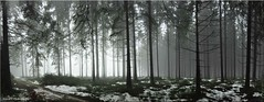 some snow with a handful of light (friedrichfrank1966) Tags: forest light wald panorama pano oberndorferhöhe winter white bäume trees naturephotography natur details foggy fog dust