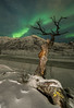 Northern Norway Lights and Tree (rafareceputi) Tags: troms norway no northernlights auroraborealis auroraboreal norge norwaynorthernlights norwegiannorthernlights tromso aurora landscape kvaloya arcticcircle arctic north lightpainting lightpaint winter