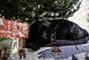 Christmas Cat #1 (lennycarl08) Tags: lenny lc cat cats blackcats black