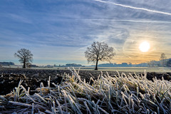 Beautiful Icy Sunrise (W_von_S) Tags: sunrise whitefrost frost icy cold sonnenaufgang raureif eis sun sonne gras bäume trees sky himmel landschaft landscape paysage paesaggio ebersberg rural ländlich dezember december 2017 winter wvons werner sony sonyilce7rm2 outdoor licht light gegenlicht backlight