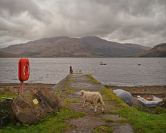 One sheep Jetty.. (Harleynik Rides Again.) Tags: glenelg kylerhea isleofskye highlands scotland jetty sheep weather loch harleynikridesagain
