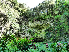 Wailua River State Park - Fern Grotto (17) (pensivelaw1) Tags: hawaii kauai wailuariverstatepark ferngrotto
