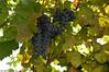 Douro River (Portugal) (Lorenzo Azzarri Photography) Tags: douro river valley portugal fiume porto portogallo panorama wine wines vino vini portwine