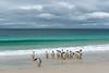 Gentoo penguins at beach (Jian Fan) Tags: gentoo penguin falklandislands