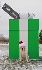 FB - Jennifer Carney (Dublin, Ohio, USA) Tags: dublinishome social media campaign holidays christmas gift box historic dublin downtown coffman park recreation center