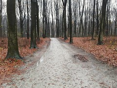 Haagse Bos on a rainy day (Elisa1880) Tags: bos forest denhaag thehague bomen trees nederland netherlands haagsebos