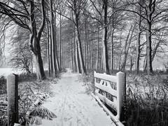 Fijne feestdagen! (Paul Beentjes) Tags: nederland netherlands heemskerk landgoed estate kasteel castle chateau marquette bomen trees gate hek fence sneeuw snow koud cold