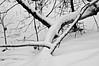 Courbes/Curves [Explorer !] (bob august) Tags: 2017 2017©rpd'aoust ahuntsic aperture3 bw blackwhite boisésaintsulpice canada d90 décembre montréal neige nikkor18300mm nikon nikond90 noiretblanc parc park silverefexpro2 snow stsulpicepark montréal québec