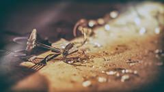 Abrupt End to Dinner (Sean Lancaster) Tags: shattered glass art prize 2015 5518 alpha grand rapids zeiss a7 fe55 sony dinner zeiss55 artprize2015 grandrapids artprize shatteredglass