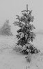 Sapin dans la tempête (ZUHMHA) Tags: bulgarie bulgaria winter hiver tree landscape horizon sky snow buzludja tempête tempêtedeneige ngc