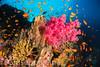 _DSC3702.jpg (pinocnt) Tags: crociera cruise egitto egypt littlebrotherisland myaldebaran marrosso redsea underwater vacanza