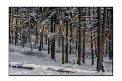 ColdWalkBreakCheck (Bruce Walter) Tags: exploremerritt destinationbc beautifulbc forest douglasfir winter winterscene winterhike cold