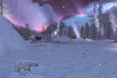 Under the Aurora (cejalaval) Tags: secondlife sl scenic landscape aurora winter snow snowflakes bears polarbear iceskating trees ice windlight firestorm